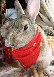 ウサギ2デジカメ 185.jpg